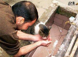 Muslim gives water to thirsty cat